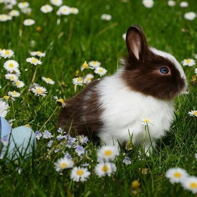 bunny in a flower field