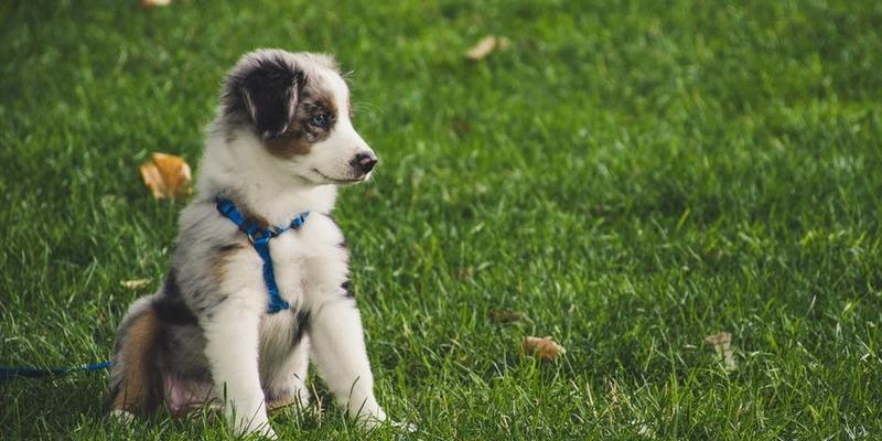 fluffy-dog-in-the-grass