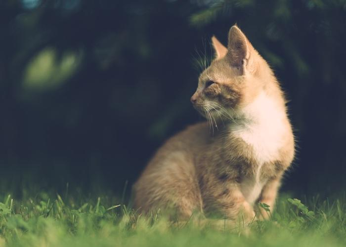 cat looking back on tall grass