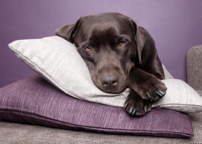 Lindsay Veterinary Clinic image