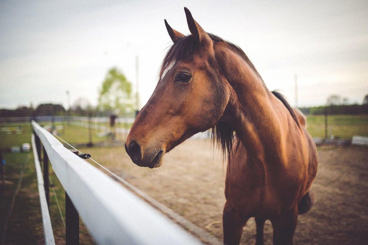 Equine All Pets Veterinary Hospital Equine Service