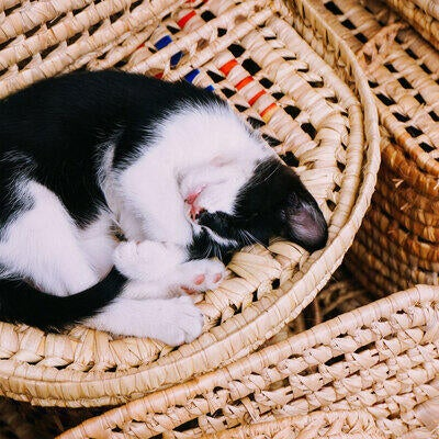 cat curled up in wicker basket