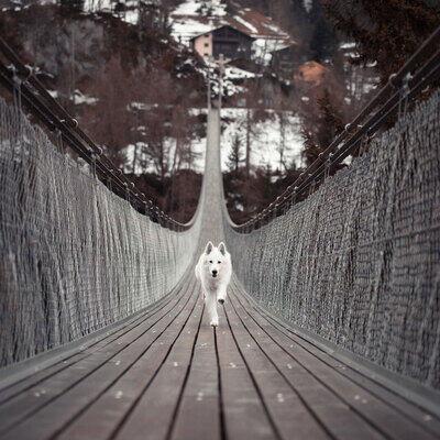 dog-running-down-bridge