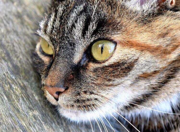 Adopt A Pet image