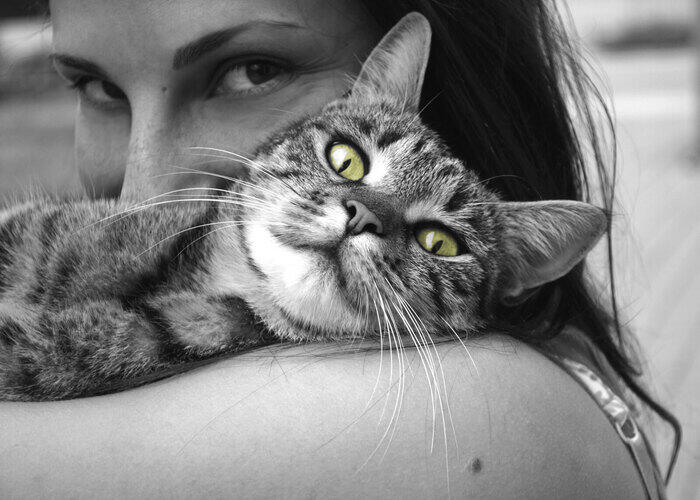 black-and-white-cat-on-owners-shoulder
