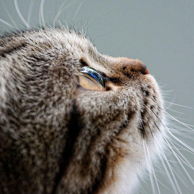cat looking up with close up of cats face