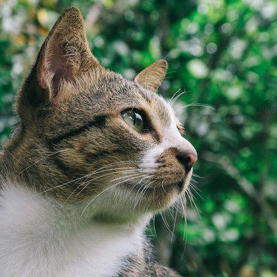 cat-outside-looking-into-the-distance