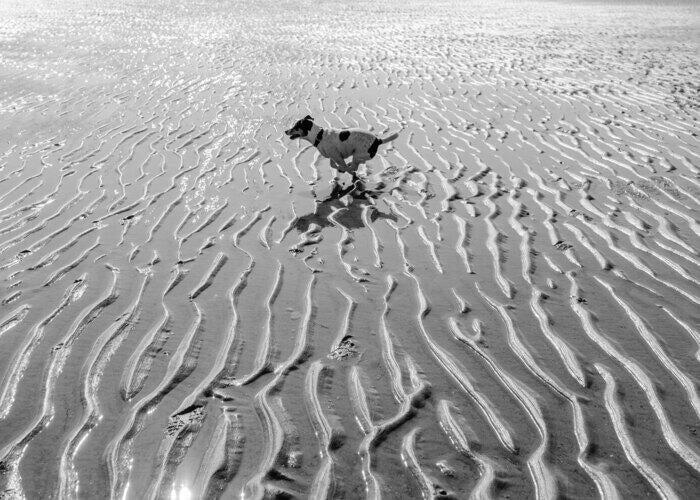 black-and-white-dog-running-on-the-beach