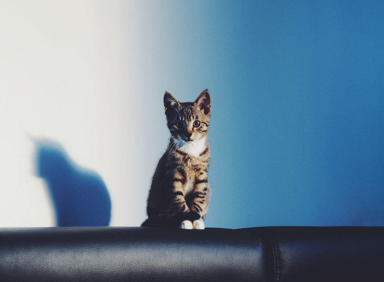 cat on top of sofa in front of blue wall